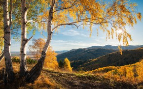 Picture autumn, forest, the sun, clouds, light, trees, landscape, mountains, branches, hills, trunks, dal, beautiful, birch, …