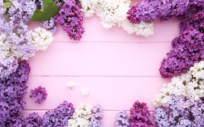 Picture flowers, background, wood, flowers, lilac, purple, lilac