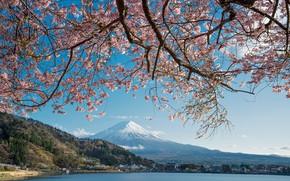 Picture lake, spring, Japan, Sakura, mount Fuji
