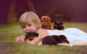 Picture dogs, look, mood, puppies, girl, friends