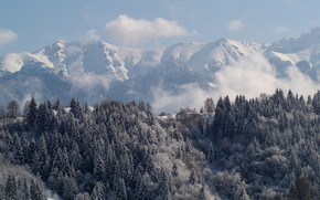 Picture Forest, Winter, Mountains