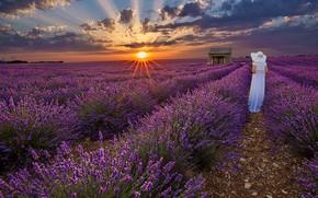 Picture sunset, woman, hat, white dress, lavender, lavender field