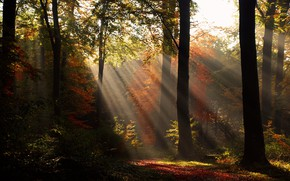 Picture autumn, forest, light, trees