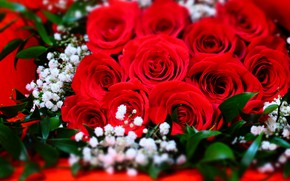 Picture macro, roses, bouquet, red, buds, al, gypsophila