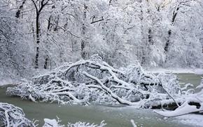 Picture winter, snow, trees, landscape, river, white, river, landscape, winter, snow, tree