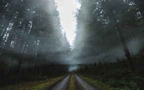 Picture road, forest, nature, fog, smoke, haze