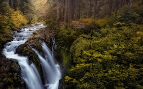 Picture forest, trees, landscape, nature, river, waterfall, stream, plants