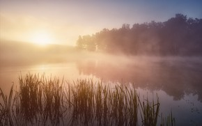 Picture the sun, fog, river, morning, reed