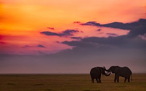 Picture field, the sky, sunset, pair, elephants, two, two elephants