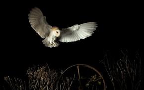 Picture night, owl, wheel