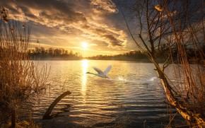 Picture autumn, the sun, sunset, nature, lake, Swan, pizza, Pahar