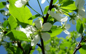 Picture white, flowering, drain