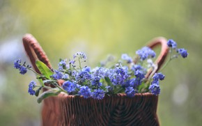 Picture forget-me-nots, blurred background, in the basket
