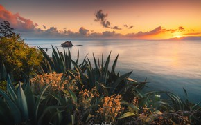 Picture sea, sunset, the evening, agave