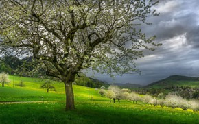 Picture trees, landscape, mountains, clouds, nature, hills, spring, flowering, meadows