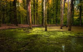 Picture forest, summer, Priroda