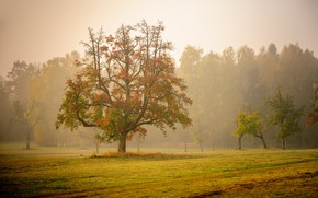 Picture autumn, trees, fog, morning, Germany