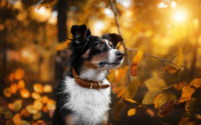 Picture autumn, nature, each, dog
