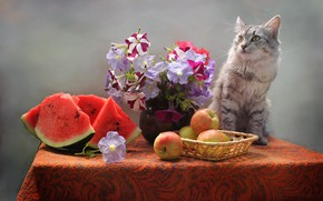 Picture cat, flowers, table, animal, apples, watermelon, vase, basket, petunias, Kovaleva Svetlana, Svetlana Kovaleva