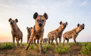 Picture the sky, nature, Hyenas