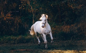 Picture white, trees, nature, pose, the dark background, horse, horse, white, the bushes, jump, gallop, horse, …