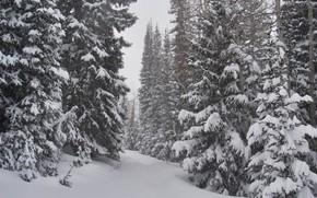 Picture Nature, Winter, Snow, Nature, Winter, Snow, Winter forest, Snow trees, Winter forest, Снежные деревья