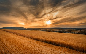 Picture field, sunset, nature