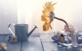 Picture flower, glass, light, yellow, table, background, one, Board, sunflower, light, petals, stem, window, tape, wooden, …