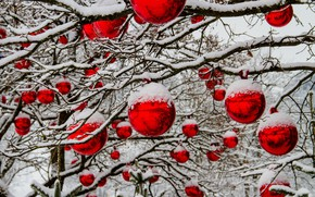 Picture snow, branches, new year, Christmas, red balls