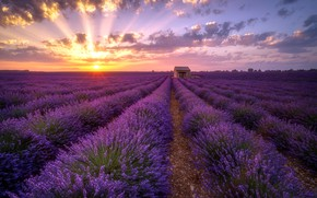 Picture field, summer, sunset, house, lavender