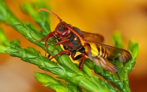 Picture macro, orange, background, plant, insect, hornet, antennae, shoots