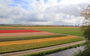 Picture photo, Nature, Field, Netherlands, Colorful, Keukenhof Gardens