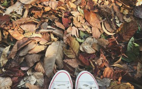 Picture autumn, leaves, background, sneakers, colorful, wood, background, autumn, leaves, autumn