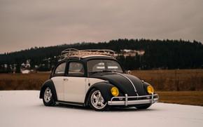 Picture Volkswagen, Beetle, Volkswagen Beetle, bug