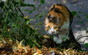 Picture autumn, cat, look, face, leaves, light, nature, pose, stone, bokeh, spotted, motley