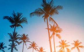 Picture beach, summer, the sky, sunset, palm trees, shore, summer, beach, sunset, seascape, beautiful, paradise, palms, …