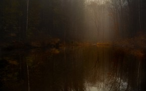 Picture forest, trees, branches, fog, lake, reflection, twilight, pond
