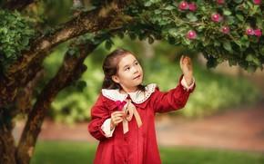 Picture leaves, flowers, nature, tree, dress, girl, child, Anastasia Barmina
