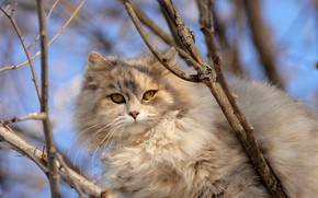 Picture cat, cat, look, face, light, branches, nature, kitty, background, tree, spring, grey, kitty, sitting, yellow …