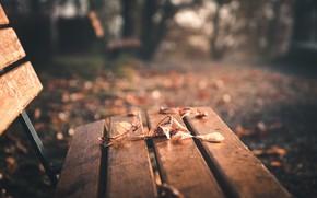 Picture LEAVES, AUTUMN, BENCH