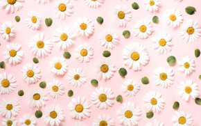 Picture flowers, background, chamomile, texture