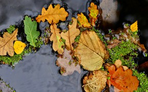 Picture autumn, leaves, water, macro