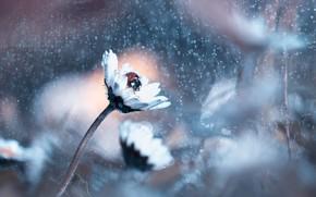 Picture FLOWER, DAISY, LADYBUG