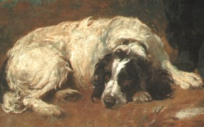 Picture dog, lies, EMMS2, french spaniel