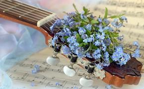 Picture flowers, notes, music, guitar, bouquet, bokeh, forget-me-nots, composition