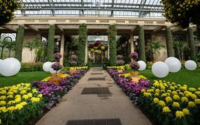 Picture flowers, design, garden, America, chrysanthemum, Longwood Gardens
