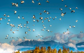 Picture autumn, the sky, clouds, trees, flight, mountains, birds, blue, tops, height, pack, white, a lot, …