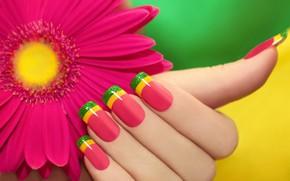 Picture flower, hand, manicure, gerbera
