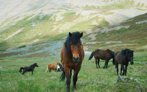 Picture field, grass, mountains, nature, pose, horse, horse, the slopes, horses, horse, pasture, the herd, bangs, …