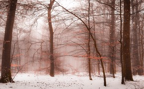 Picture snow, winter, nature, branch, winter, fog, deevia, trunks, late autumn, foliage, haze, mood, branches, forest